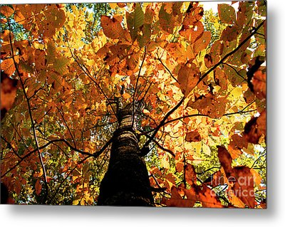 Autumn Is Glorious Metal Print