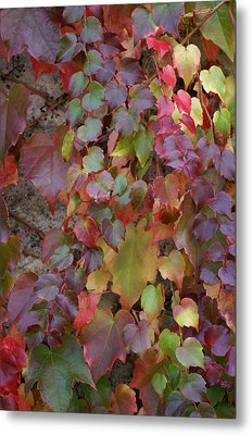 Autumn Ivy Metal Print by Jessica Rose