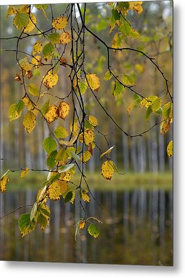 Autumn  Metal Print by Jouko Lehto