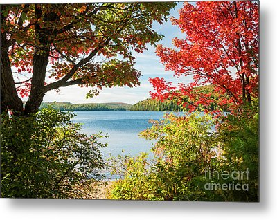 Autumn Lake Metal Print by Elena Elisseeva