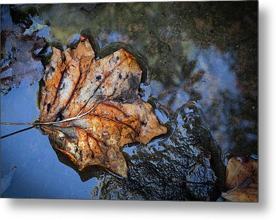 Metal Print featuring the photograph Autumn Leaf by Debra and Dave Vanderlaan