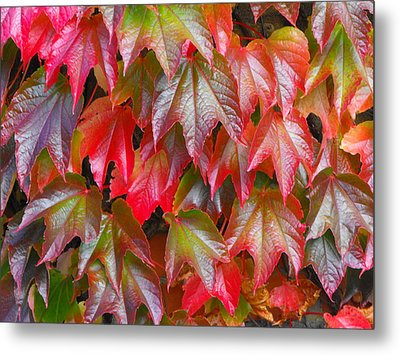 Autumn Leaves 01 Metal Print