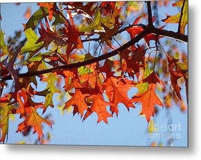 Autumn Leaves 16 Metal Print
