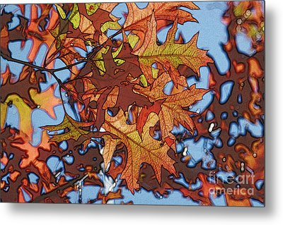 Autumn Leaves 17 - Variation  2 Metal Print by Jean Bernard Roussilhe