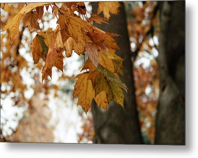 Autumn Leaves 2- By Linda Woods Metal Print by Linda Woods