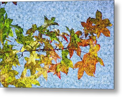 Metal Print featuring the photograph Autumn Leaves 2 by Jean Bernard Roussilhe