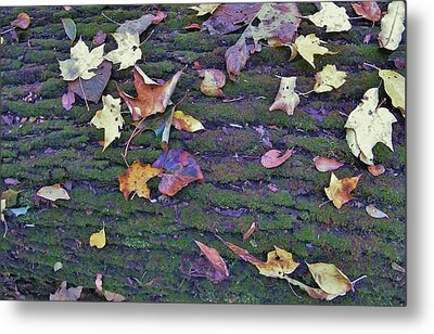 Autumn Leaves And Moss On Log   Indiana Metal Print by Rory Cubel