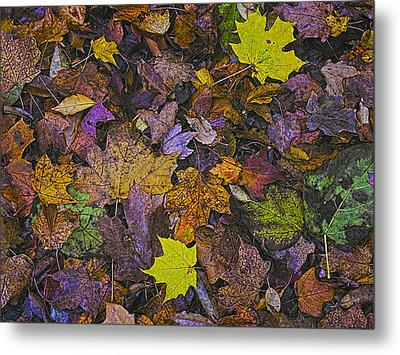 Autumn Leaves At Side Of Road Metal Print