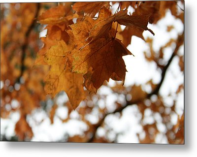 Autumn Leaves- By Linda Woods Metal Print by Linda Woods