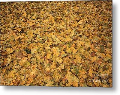 Autumn Leaves Canvas Metal Print by Carol Groenen