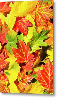 Metal Print featuring the photograph Autumn Leaves by Christina Rollo