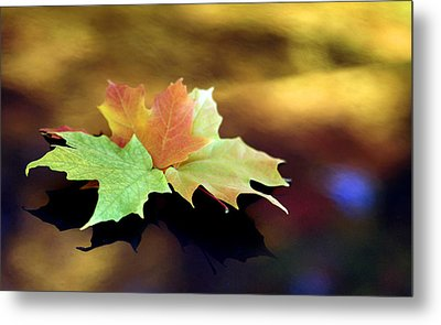 Autumn Leaves  Metal Print by Dmitriy Margolin