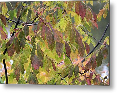 Metal Print featuring the photograph Autumn Leaves by Doris Potter
