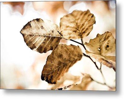 Autumn Leaves Metal Print by Frank Tschakert