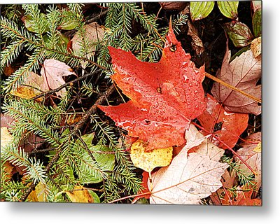 Autumn Leaves Metal Print by Larry Ricker