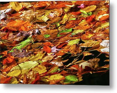 Metal Print featuring the photograph Autumn Leaves by Mitch Cat