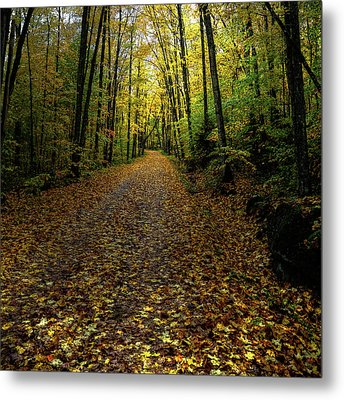 Metal Print featuring the photograph Autumn Leaves On The Trail by David Patterson