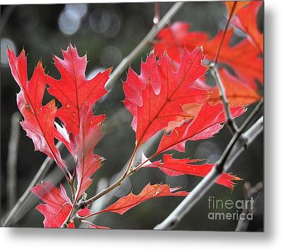 Metal Print featuring the photograph Autumn Leaves by Peggy Hughes