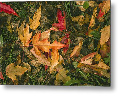 Autumn Leaves Metal Print by Thubakabra