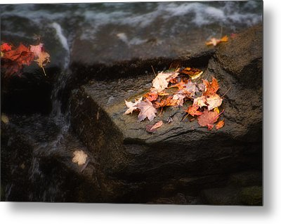 Autumn Leaves Metal Print by Tom Mc Nemar