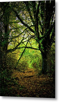 Metal Print featuring the photograph Autumn Light by David Patterson