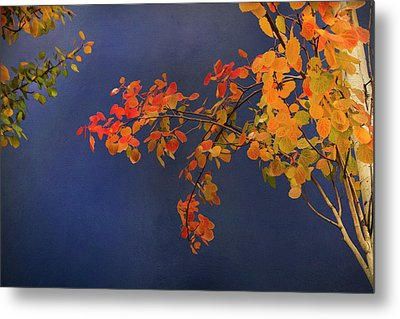 Metal Print featuring the photograph Autumn Matinee by Theresa Tahara