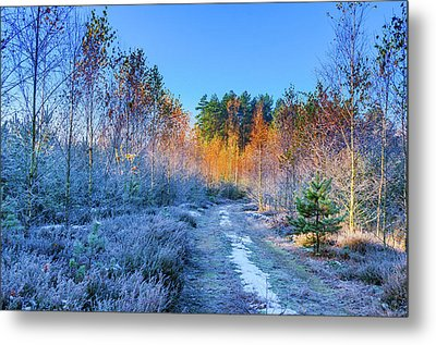 Metal Print featuring the photograph Autumn Meets Winter by Dmytro Korol