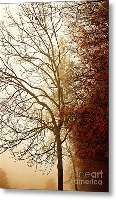 Metal Print featuring the photograph Autumn Morning by Stephanie Frey