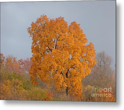 Autumn Over Prettyboy Metal Print