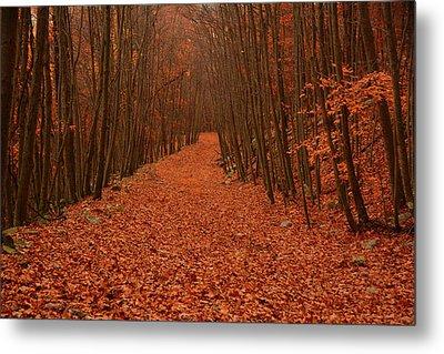 Autumn Passage Metal Print by Raymond Salani III