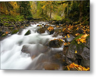 Autumn Passages Metal Print by Mike  Dawson