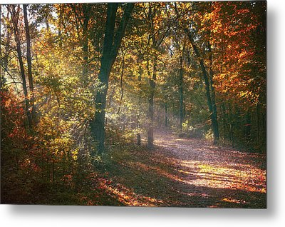 Autumn Path Metal Print by Scott Norris