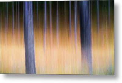 Metal Print featuring the photograph Autumn Pine Forest Abstract by Dirk Ercken
