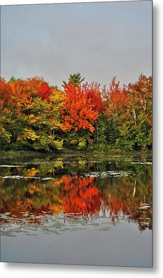 Metal Print featuring the photograph Autumn Portrait by Kathleen Sartoris