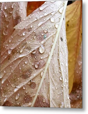 Autumn Rain Metal Print by Alpha Pup