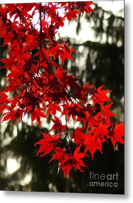 Autumn Red Metal Print by Jeff Breiman