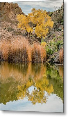Autumn Reflection At Boyce Thompson Arboretum Metal Print