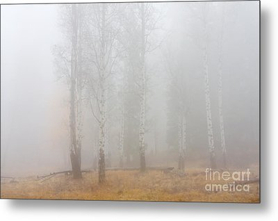 Autumn Reveals Metal Print by Mike  Dawson