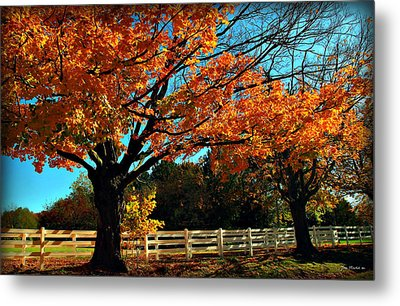 Metal Print featuring the photograph Autumn Rows by Joan  Minchak
