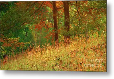 Autumn Scene In The Forest Metal Print by Yali Shi