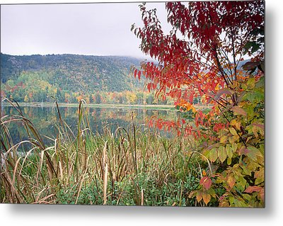 Autumn Scenic Acadia National Park Maine Metal Print by George Oze