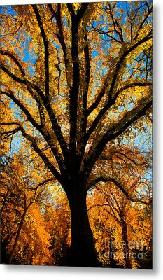 Autumn Season 4 Metal Print by Terry Elniski