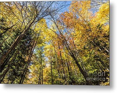 Metal Print featuring the photograph Autumn Skies by Anthony Baatz