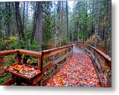Autumn Solitude  Metal Print by Catherine Reusch Daley