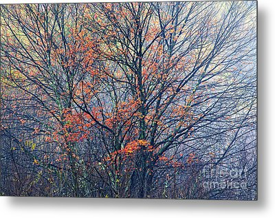 Autumn Sugar Maple In Fog Metal Print by Thomas R Fletcher