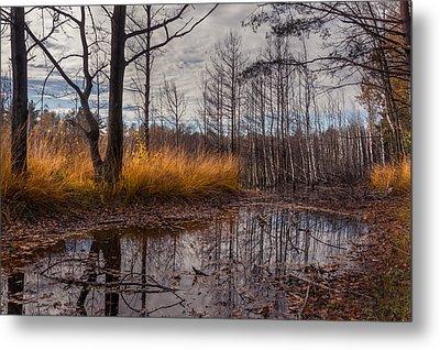 Autumn Swamp Metal Print by Dmytro Korol