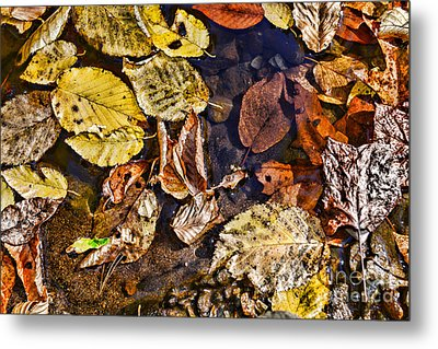 Autumn The Color Of Nature Metal Print