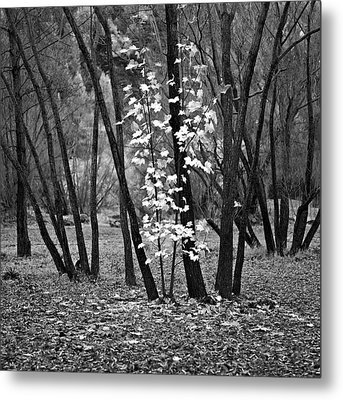 Autumn Tones Metal Print