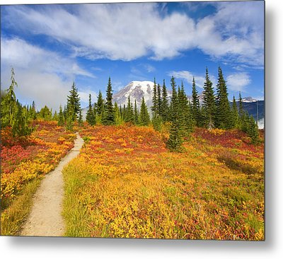 Autumn Trail Metal Print by Mike  Dawson