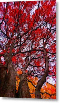 Autumn Tree Crowns Metal Print by Lilia D